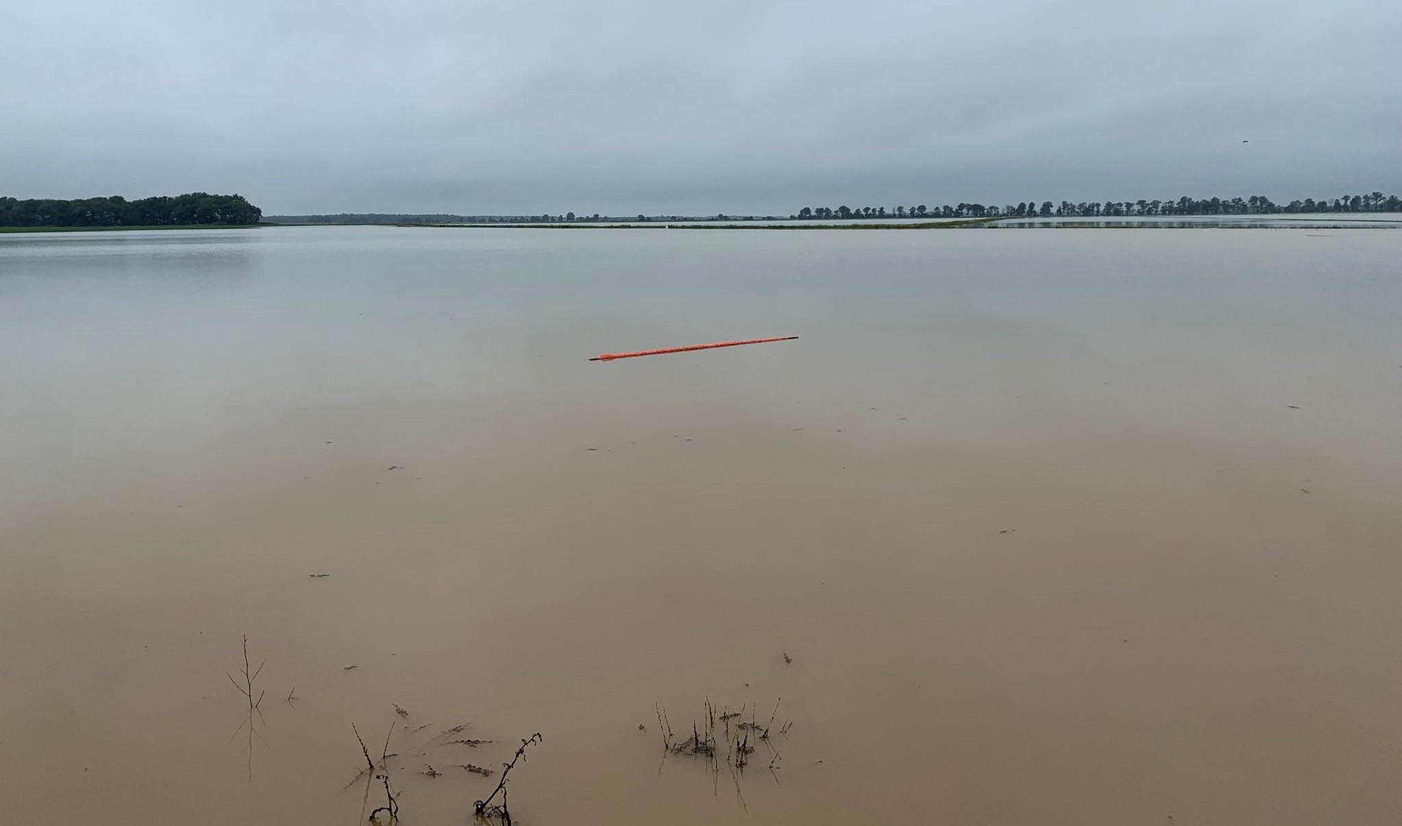 Submerged rice field
